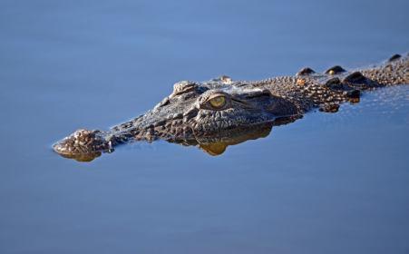 croc-learn-English-Melbourne